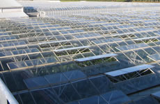Cogeneration for tomato and lettuce greenhouse operations
