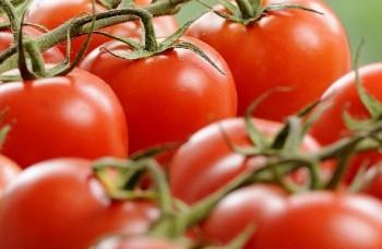 TomatoesThumb