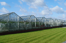P3P & APS Salads Greenhouse CHP, Alderley Edge