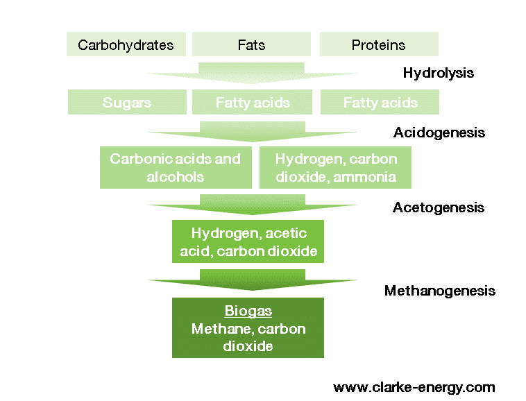 Biogas formation diagram showing hydrolysis, acetogenesis, acidogenesis and methanogenesis