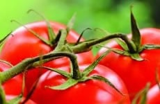 British Tomato Growers' Assocation Conference 2013