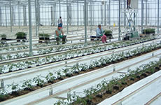 Greenhouse Gas Solution For Wight Salads